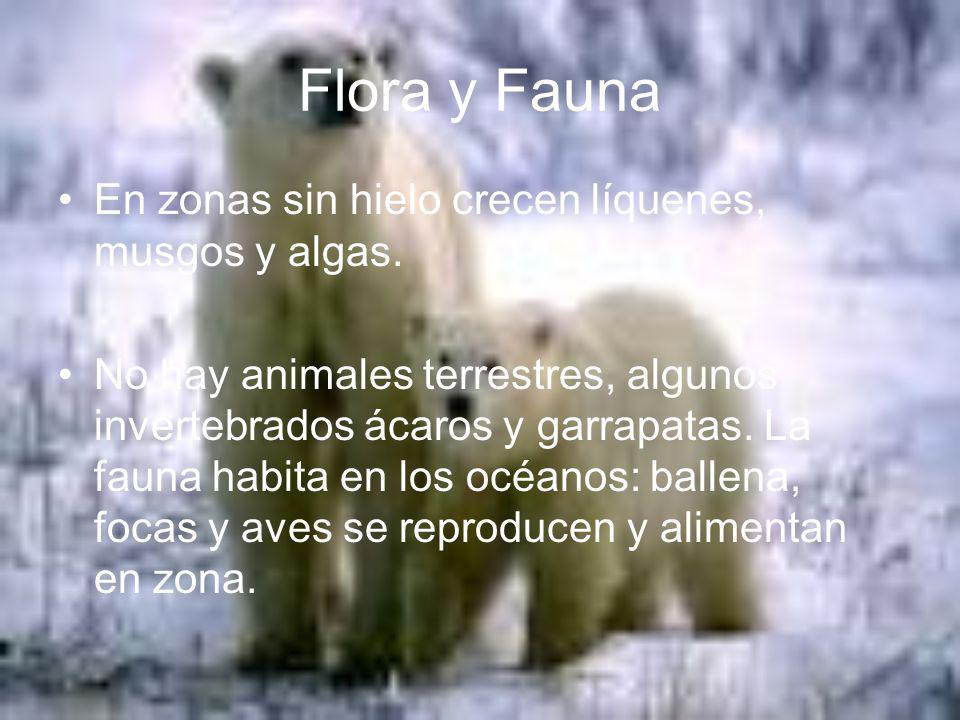 Flora y Fauna En zonas sin hielo crecen líquenes, musgos y algas. No hay animales terrestres, algunos invertebrados ácaros y garrapatas. La fauna habi