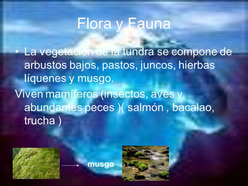 La vegetación de la tundra se compone de arbustos bajos, pastos, juncos, hierbas líquenes y musgo. Viven mamíferos (insectos, aves y abundantes peces