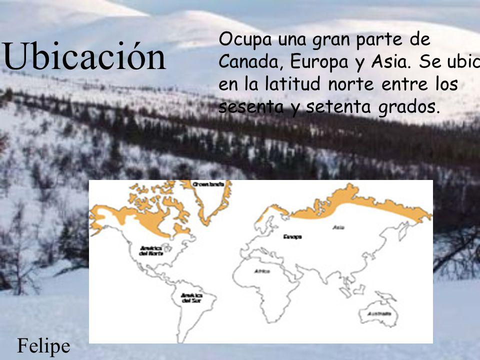 Tundra y Taiga Por: Sofía Galperin, Sol Barrientos, Mirko Melhem y Felipe Cordero.