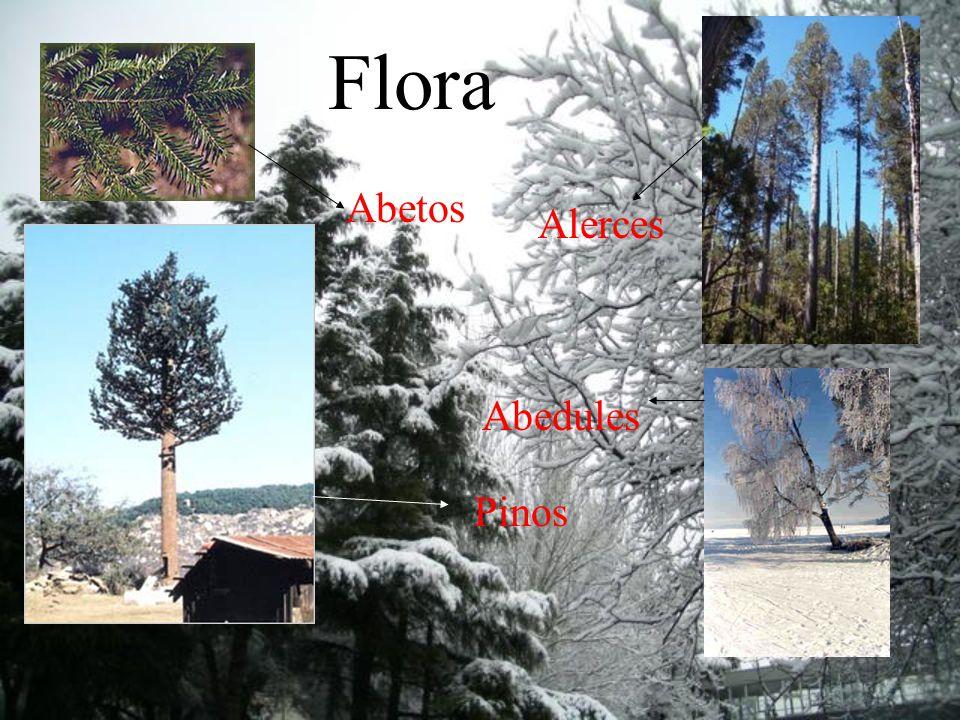 Características Tundra Los veranos son frescos y hay luz las 24 hrs.Los inviernos son fríos y hay oscuridad completa. Y todo el tiempo hay nieve. Taig