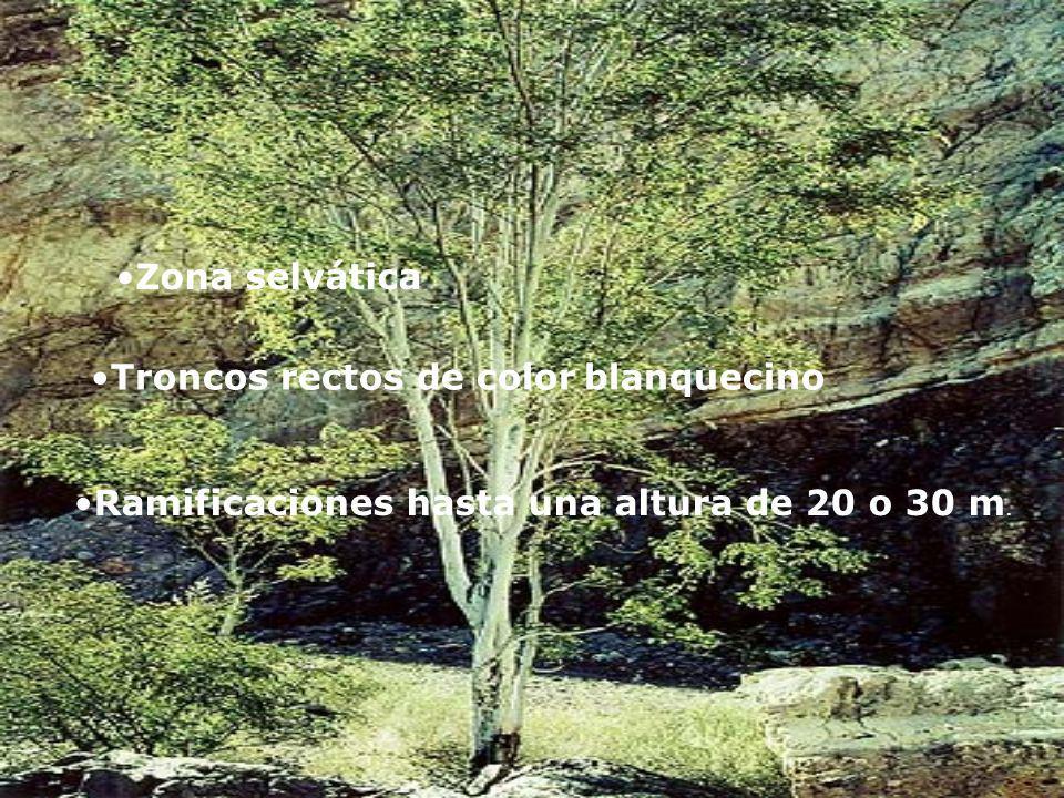 Arbustos bajos de aproximadamente 40 centimeters. Estepa Arbústiva Coirones Gramíneas de varios géneros que generalmente tienen coloración amarillo do