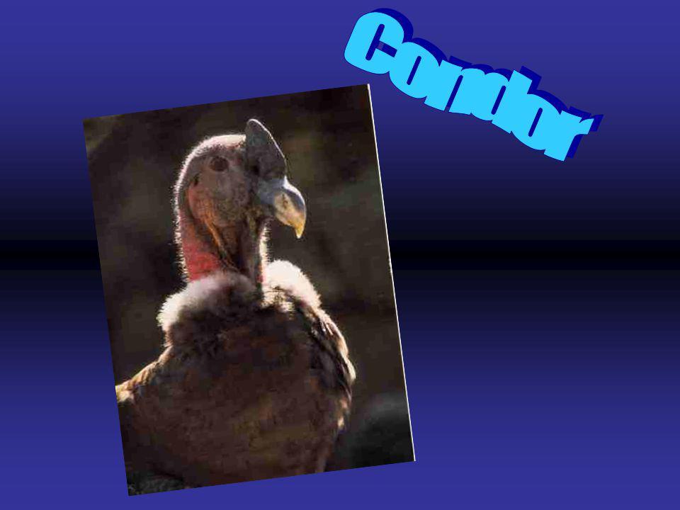 En la fauna se encuentran los siguientes animales: