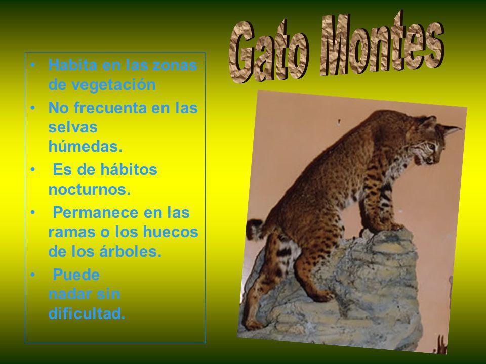 Habita en las zonas de vegetación No frecuenta en las selvas húmedas.