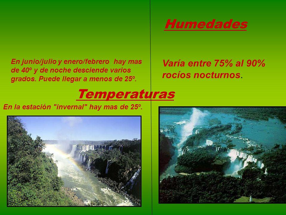 Lluvias Los árboles ayudan a producir lluvias. Si se talan llueve menos. Si los árboles se cortan las lluvias pueden provocar inundaciones. Los árbole