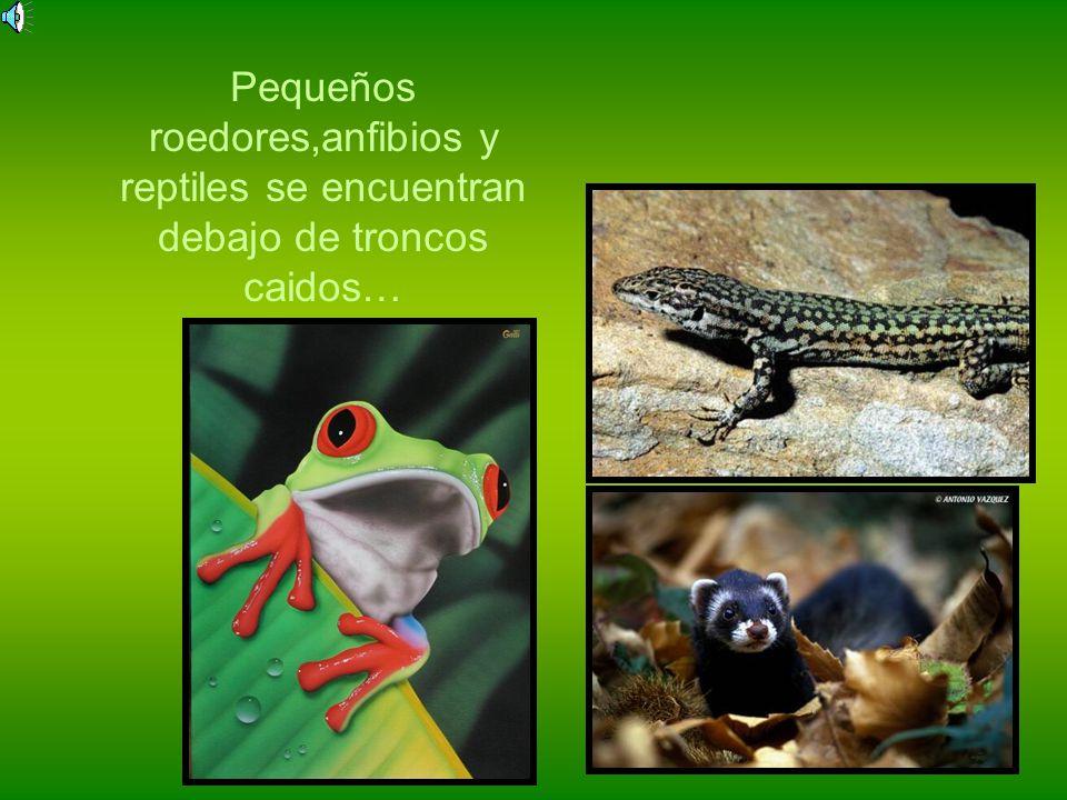 Mas de 330 especies de peces Mas de 70 especies de anfibios Mas de 150 especies de reptiles Mas de 100 especies de mamiferos Mas de 550 especies de av