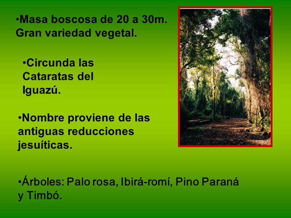 Masa boscosa de 20 a 30m.Gran variedad vegetal. Circunda las Cataratas del Iguazú.
