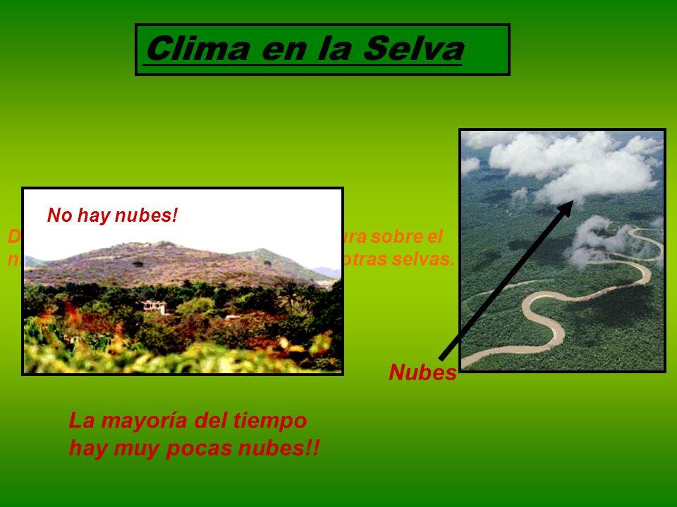 Clima en la Selva Dada su posición latitudinal y y la altura sobre el nivel del mar es menos calurosa que otras selvas.