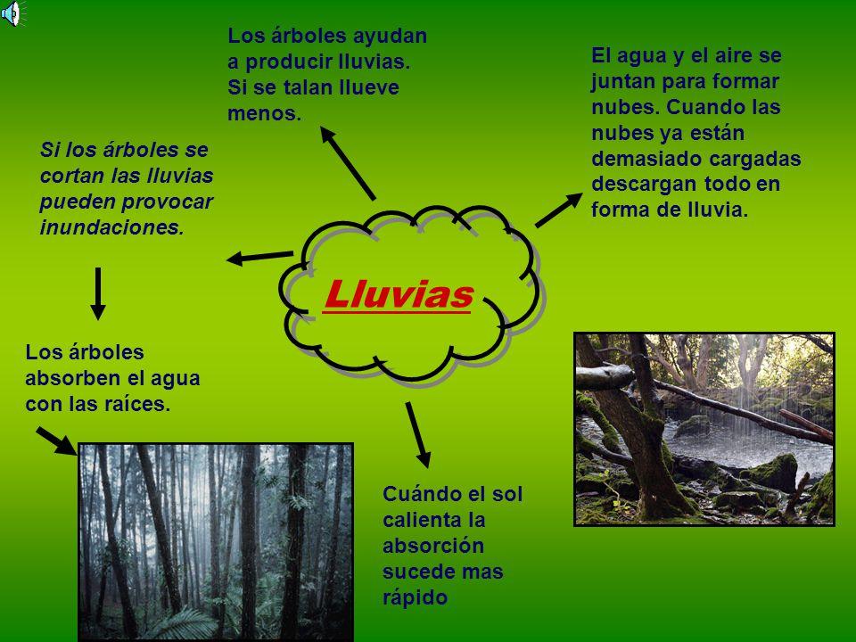 Lluvias Los árboles ayudan a producir lluvias.Si se talan llueve menos.
