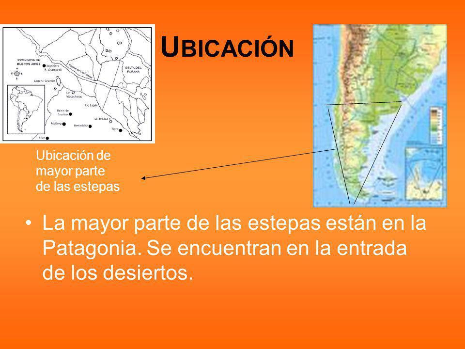 U BICACIÓN La mayor parte de las estepas están en la Patagonia.