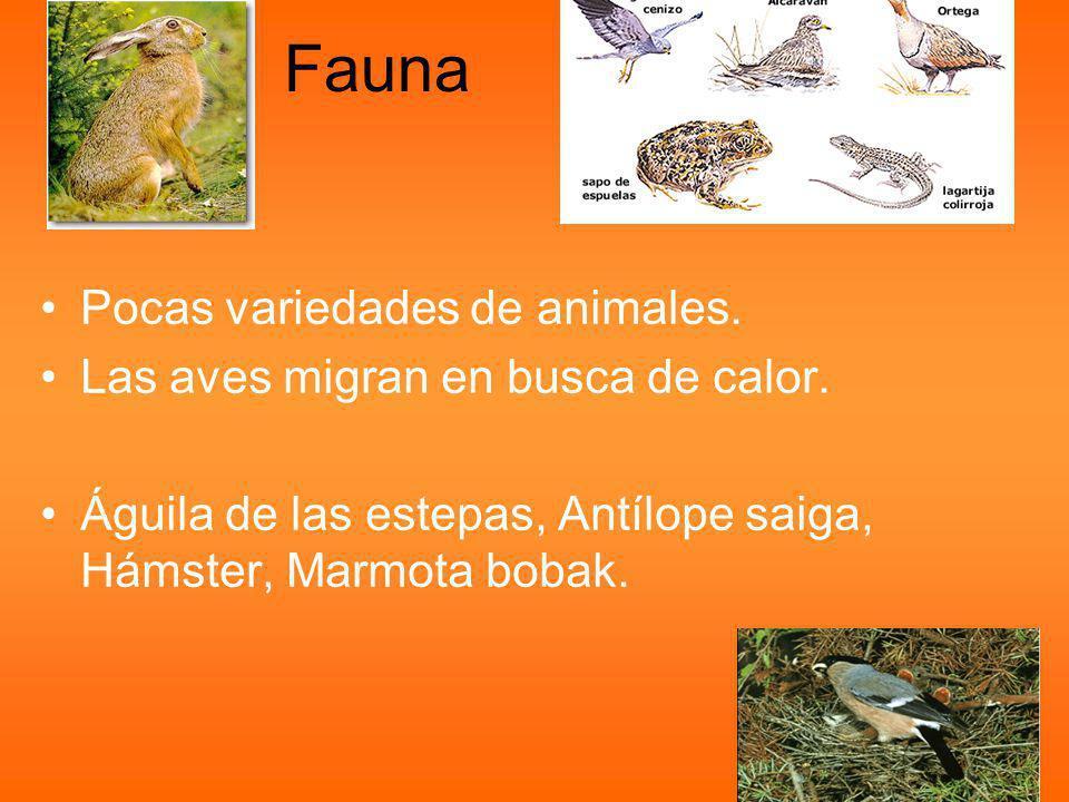 Fauna Pocas variedades de animales.Las aves migran en busca de calor.