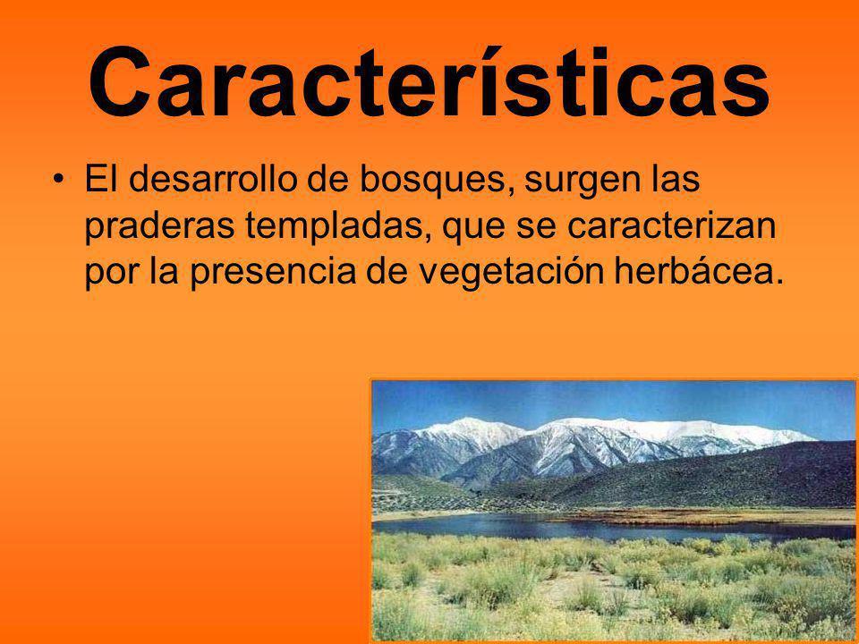 Características El desarrollo de bosques, surgen las praderas templadas, que se caracterizan por la presencia de vegetación herbácea.