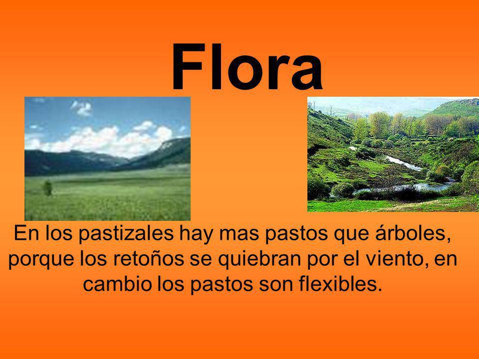 En los pastizales hay mas pastos que árboles, porque los retoños se quiebran por el viento, en cambio los pastos son flexibles.