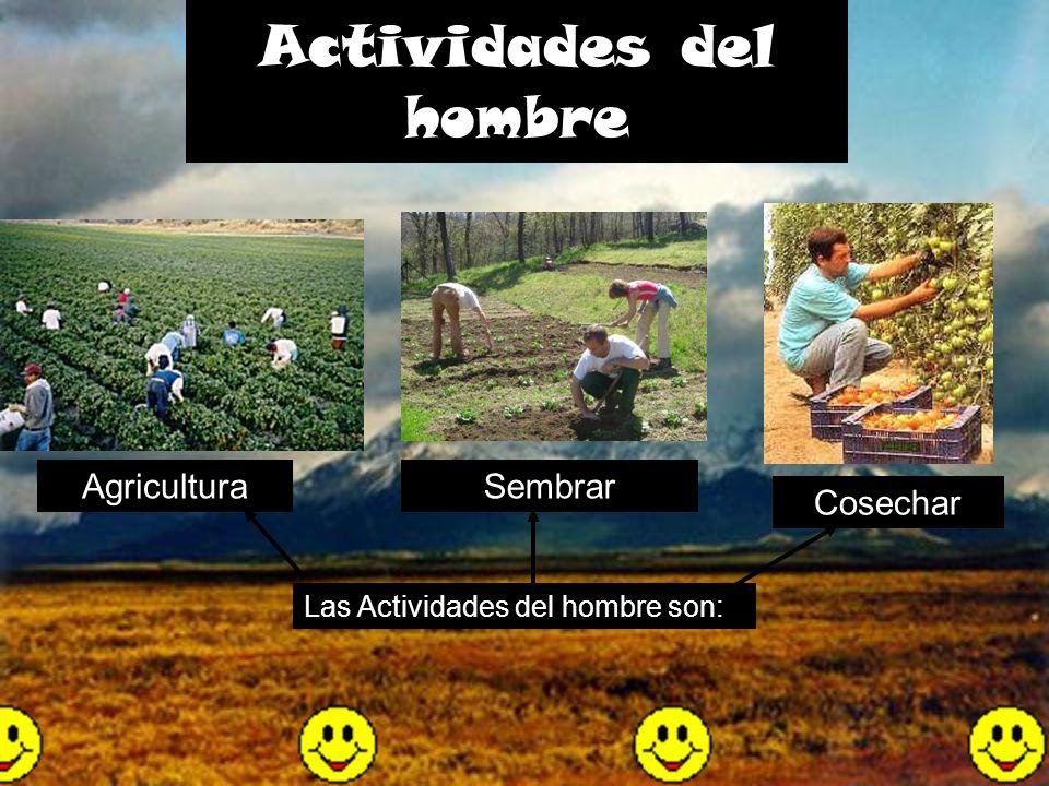 Agricultura Actividades del hombre Sembrar Cosechar Las Actividades del hombre son:
