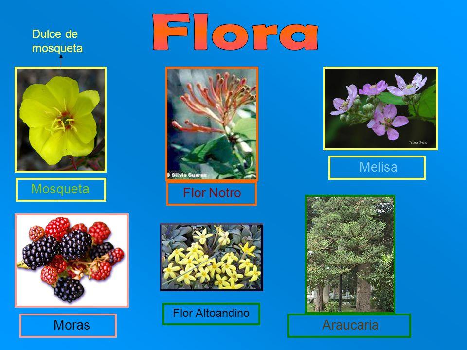 Mosqueta Flor Notro Melisa Dulce de mosqueta Araucaria Flor Altoandino Moras