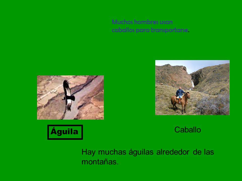 Águila Hay muchas águilas alrededor de las montañas.