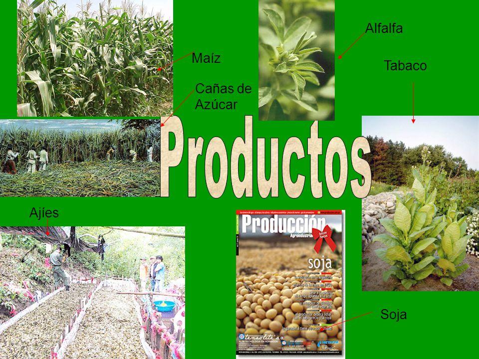 Tabaco Soja Ajíes Maíz Cañas de Azúcar Alfalfa