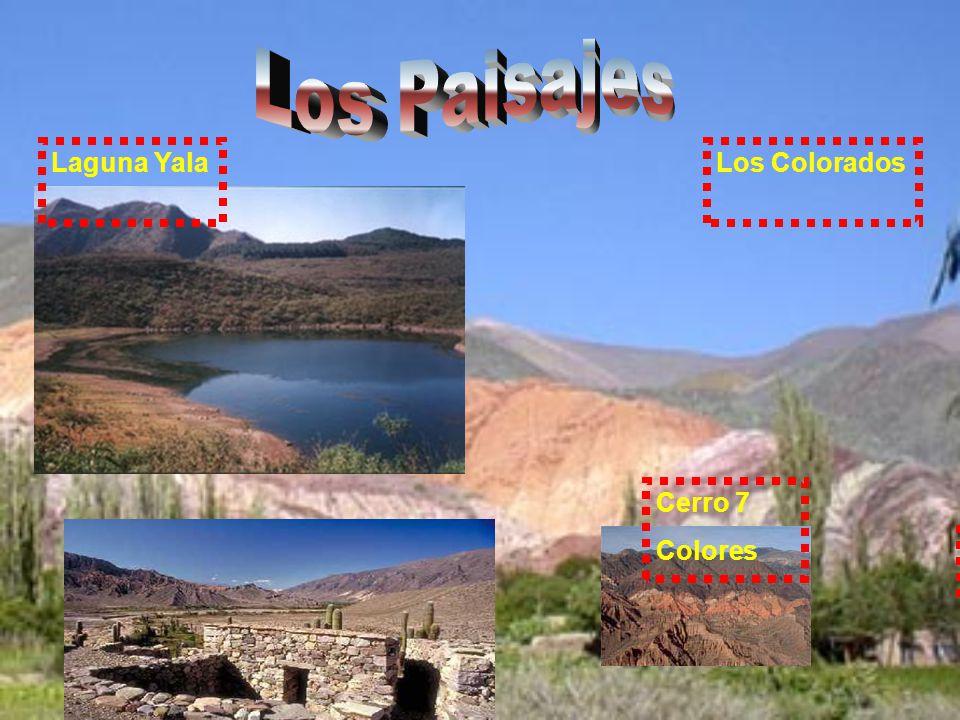 guanacos llama Se alimentan de las plantas Y andan por las montañas.