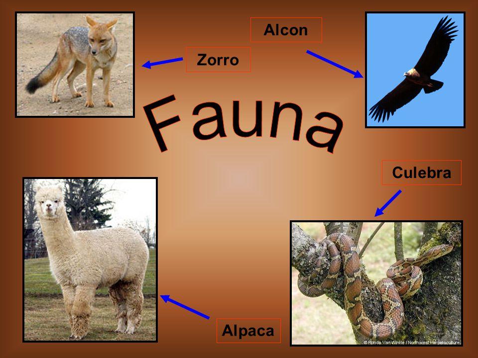 Alpaca Culebra Zorro Alcon