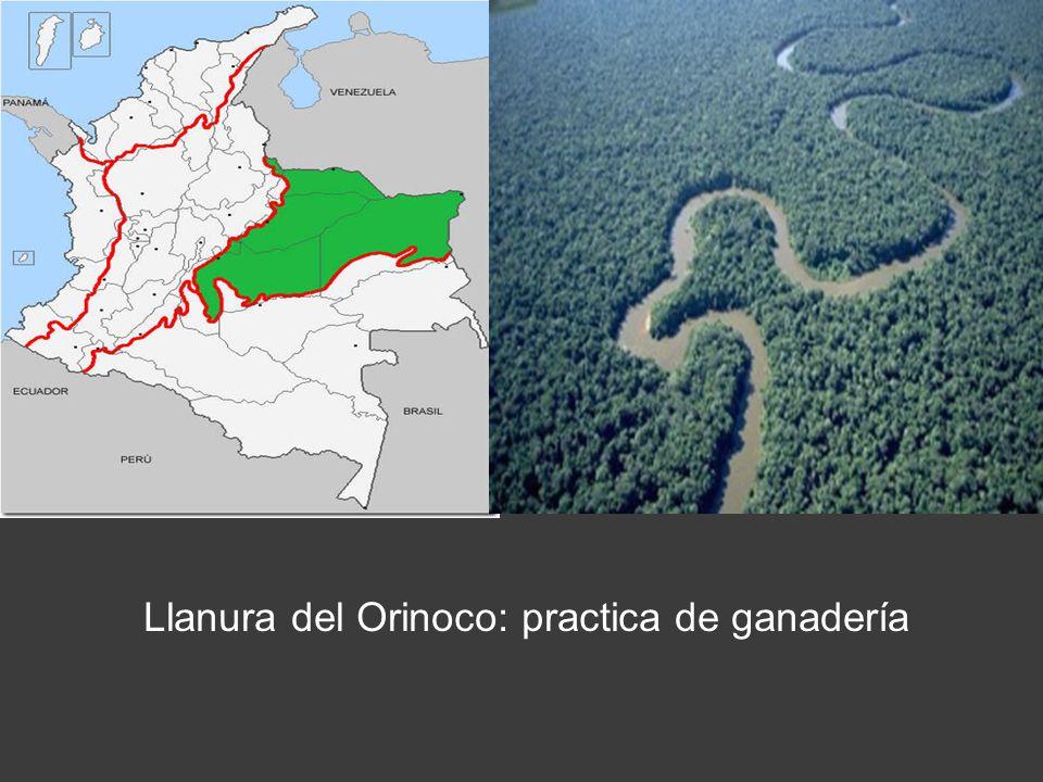 EN AMAZONAS
