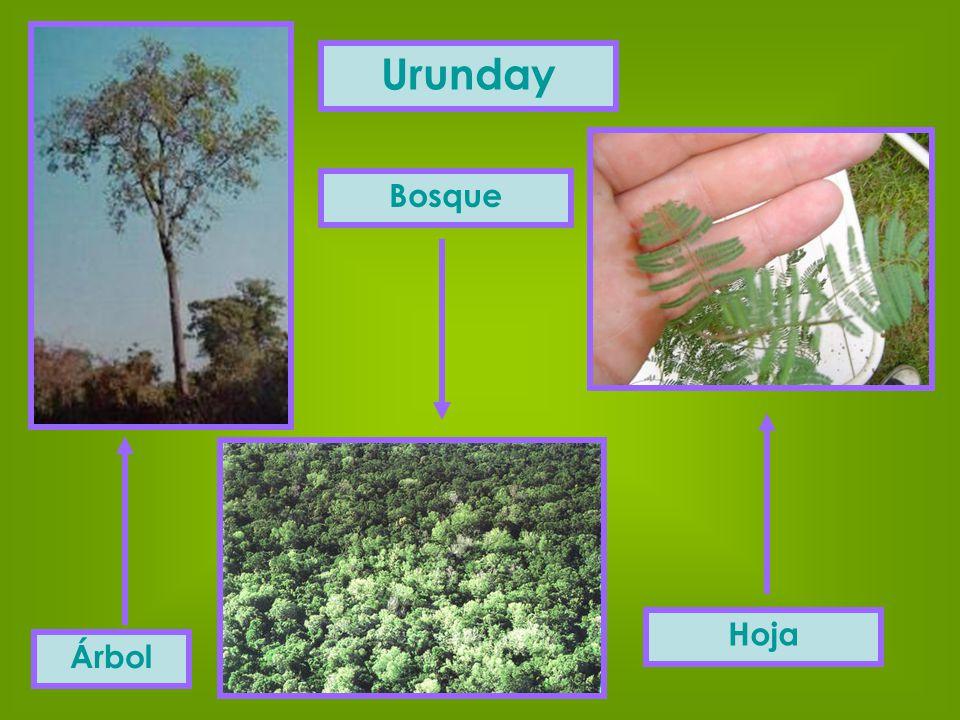 Urunday Árbol Bosque Hoja