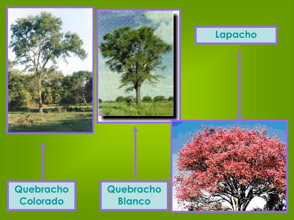 Quebracho Colorado Quebracho Blanco Lapacho