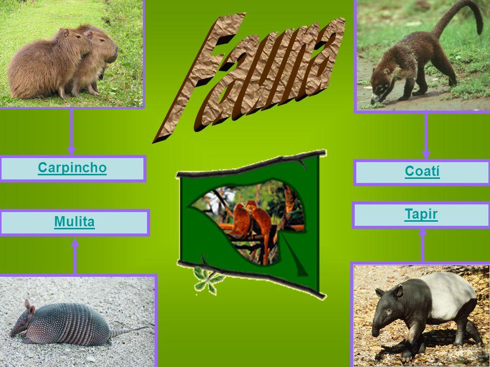 Carpincho Coatí Mulita Tapir