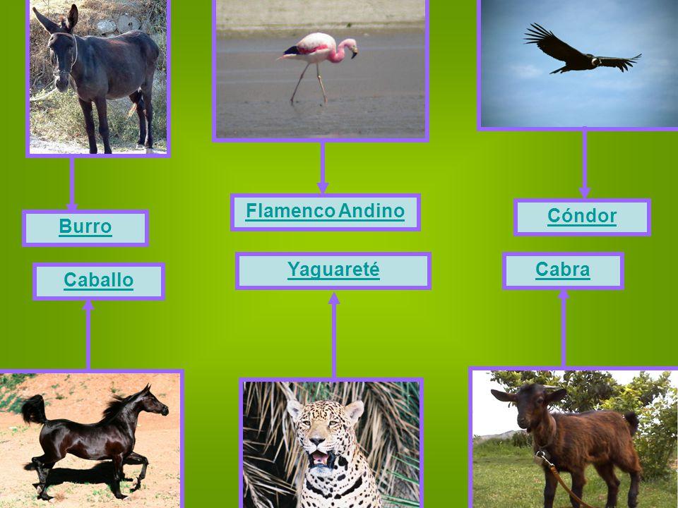 Yaguareté Caballo Burro Cabra Flamenco Andino Cóndor