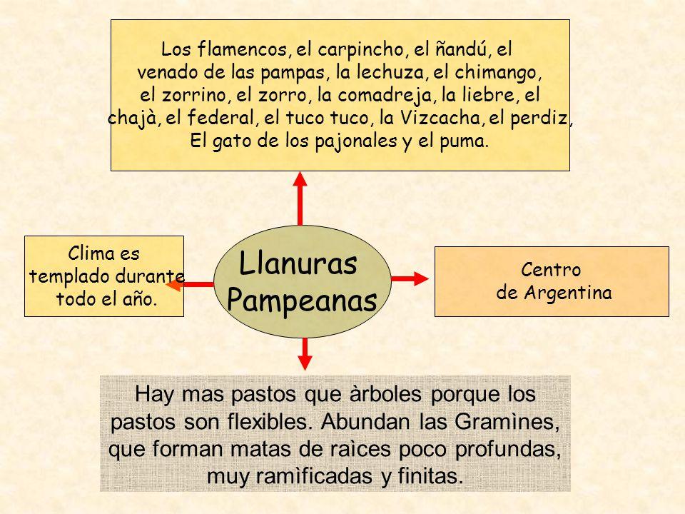 Llanuras Pampeanas Centro de Argentina Los flamencos, el carpincho, el ñandú, el venado de las pampas, la lechuza, el chimango, el zorrino, el zorro,