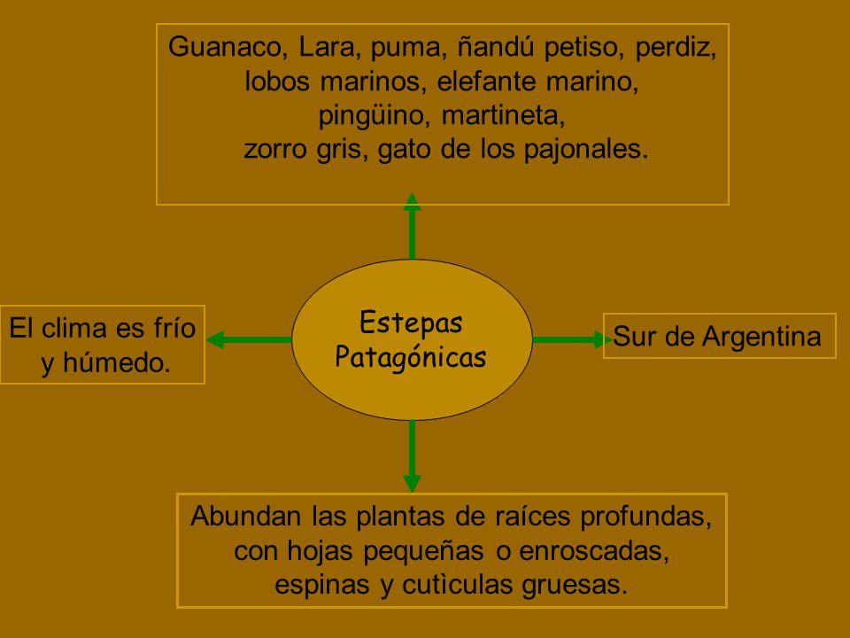 Estepas Patagónicas Abundan las plantas de raíces profundas, con hojas pequeñas o enroscadas, espinas y cutìculas gruesas. El clima es frío y húmedo.
