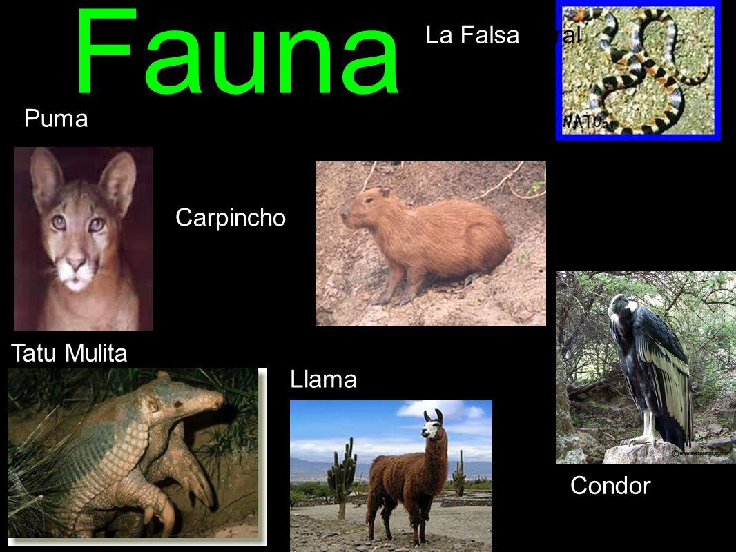 Fauna Carpincho Llama Tatu Mulita Puma La Falsa coral Condor