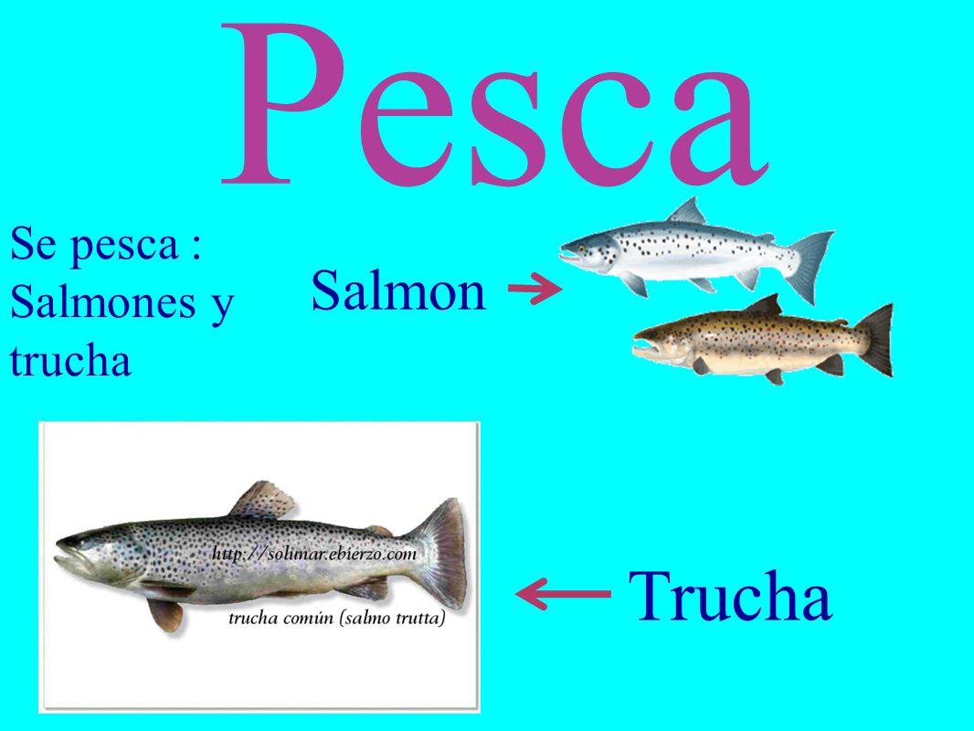 Pesca Se pesca : Salmones y trucha Salmon Trucha