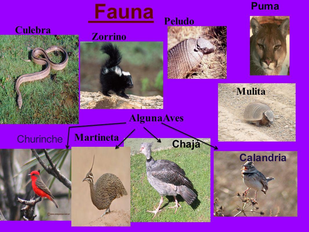Fauna Chajá Calandria Churinche Puma Mulita Martineta Peludo Culebra Zorrino AlgunaAves