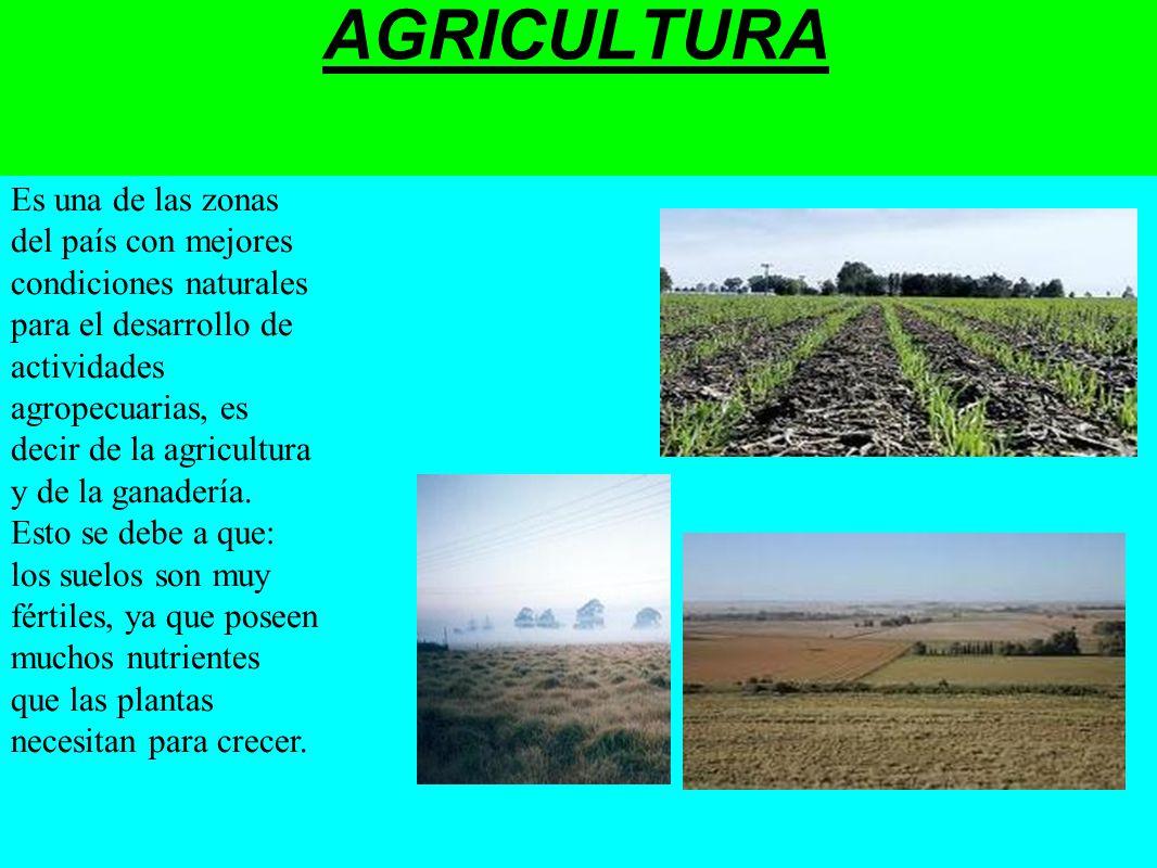 AGRICULTURA Es una de las zonas del país con mejores condiciones naturales para el desarrollo de actividades agropecuarias, es decir de la agricultura