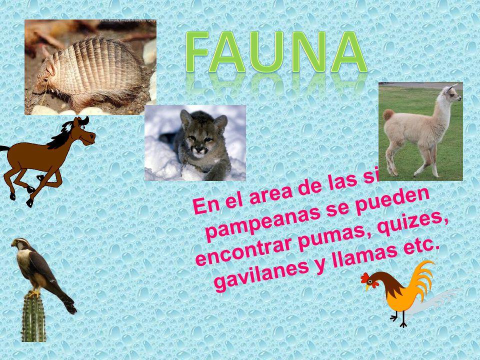 En el area de las sierras pampeanas se pueden encontrar pumas, quizes, gavilanes y llamas etc.