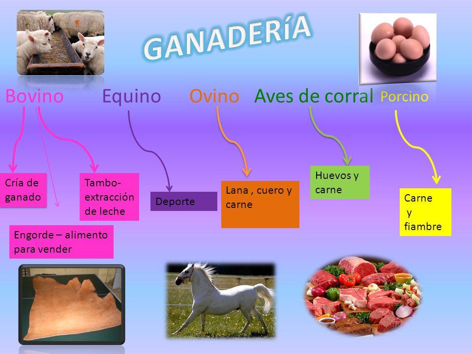 Bovino Equino Ovino Aves de corral Cría de ganado Engorde – alimento para vender Tambo- extracción de leche Deporte Lana, cuero y carne Huevos y carne