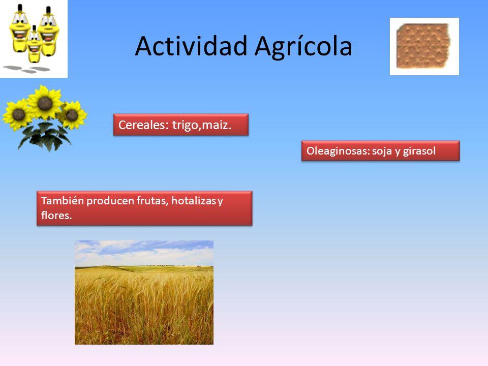Actividad Agrícola También producen frutas, hotalizas y flores. Cereales: trigo,maiz. Oleaginosas: soja y girasol