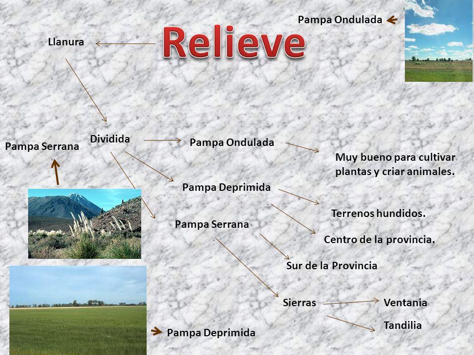 Dividida Pampa Ondulada Muy bueno para cultivar plantas y criar animales. Pampa Deprimida Terrenos hundidos. Llanura Centro de la provincia. Pampa Ser
