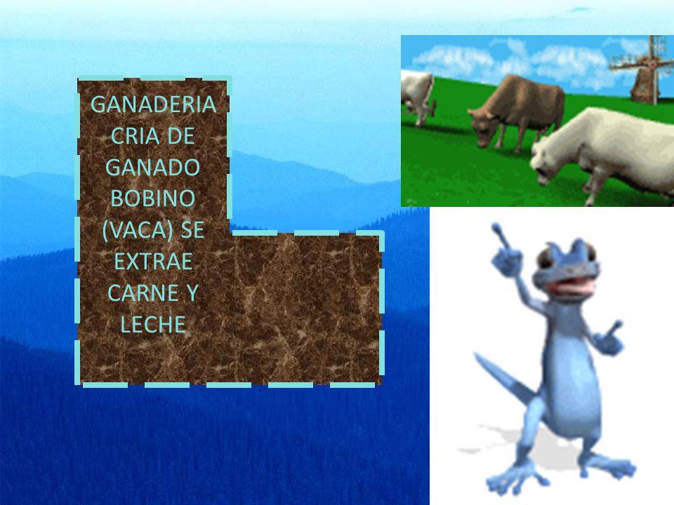 GANADERIA CRIA DE GANADO BOBINO (VACA) SE EXTRAE CARNE Y LECHE