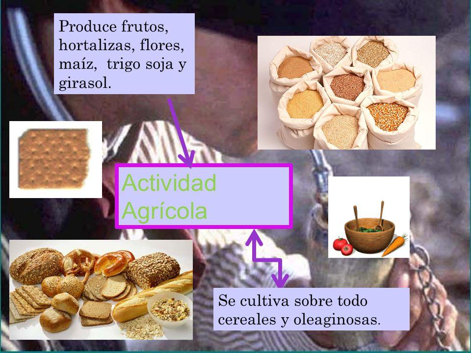 Actividad Agrícola Se cultiva sobre todo cereales y oleaginosas.
