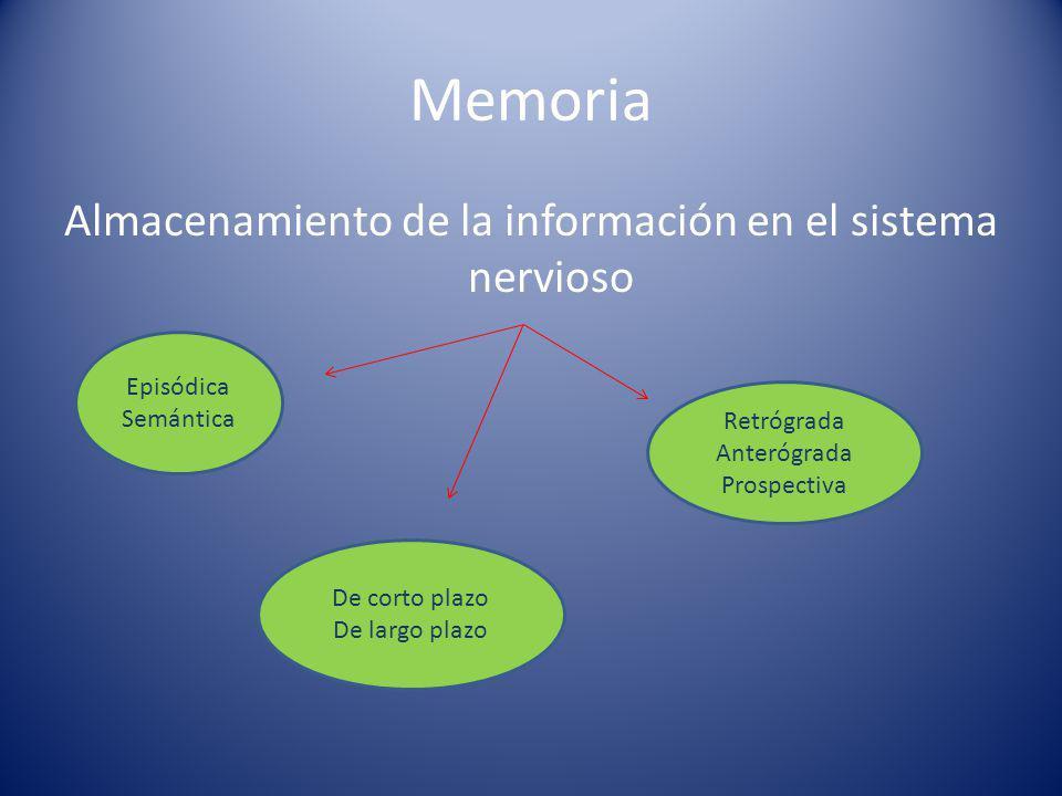Memoria Almacenamiento de la información en el sistema nervioso Episódica Semántica De corto plazo De largo plazo Retrógrada Anterógrada Prospectiva