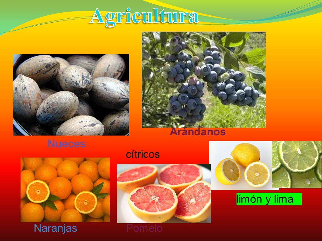 Arándanos Nueces cítricos Naranjas limón y lima Pomelo
