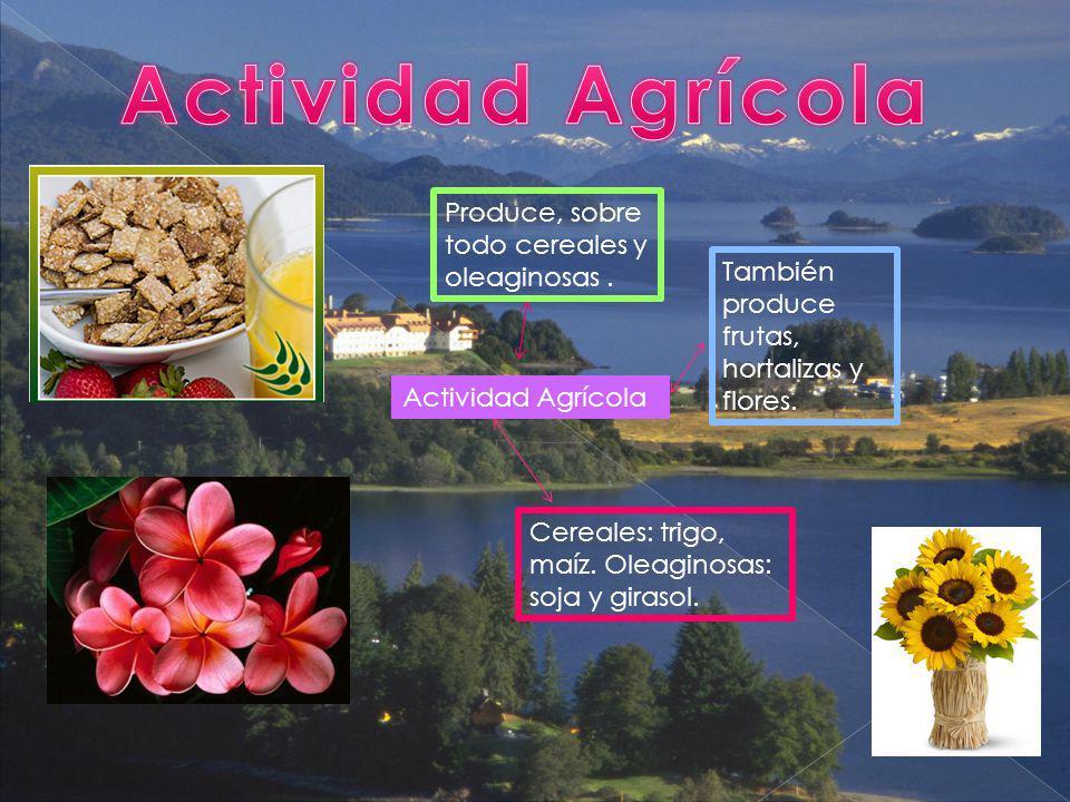 Actividad Agrícola Produce, sobre todo cereales y oleaginosas. También produce frutas, hortalizas y flores. Cereales: trigo, maíz. Oleaginosas: soja y