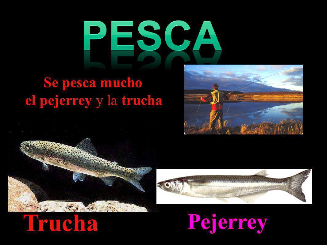 Se pesca mucho el pejerrey y la trucha Trucha.