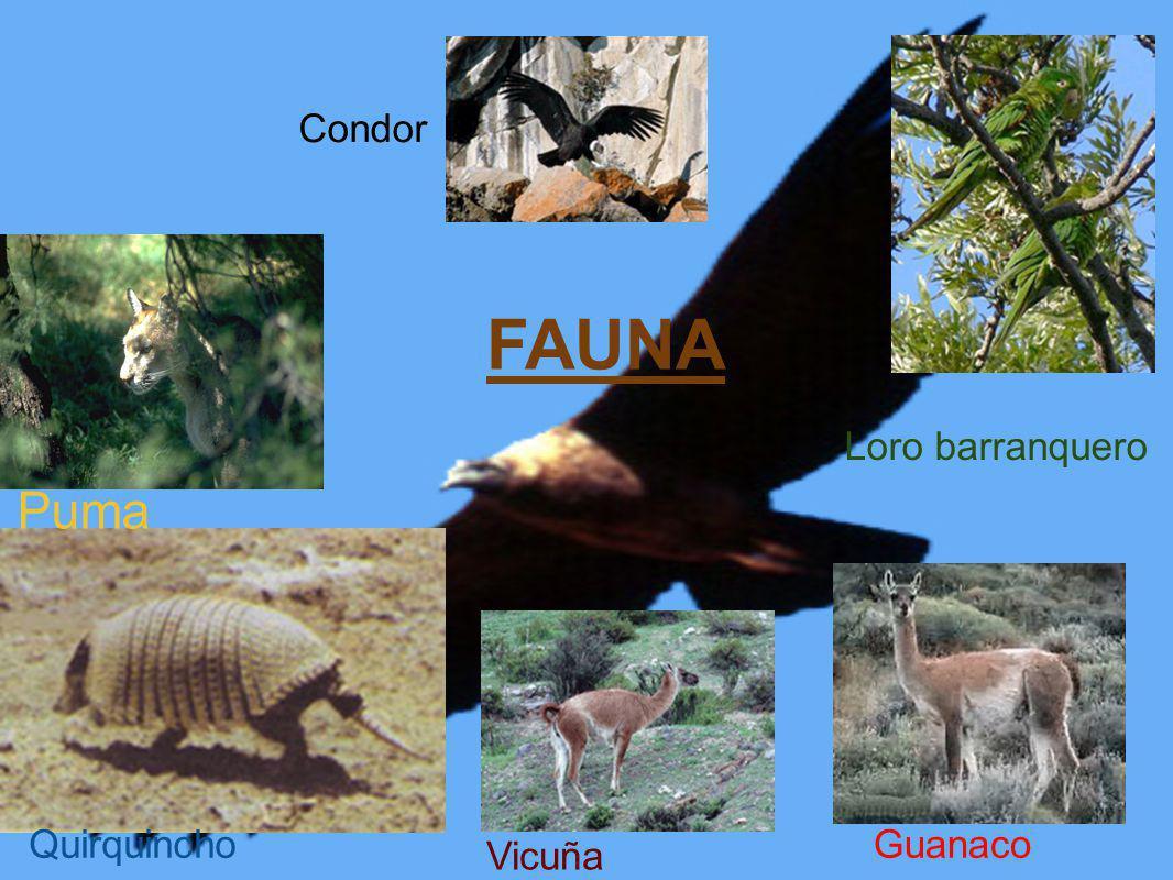 FAUNA Puma QuirquinchoGuanaco Vicuña Loro barranquero Condor