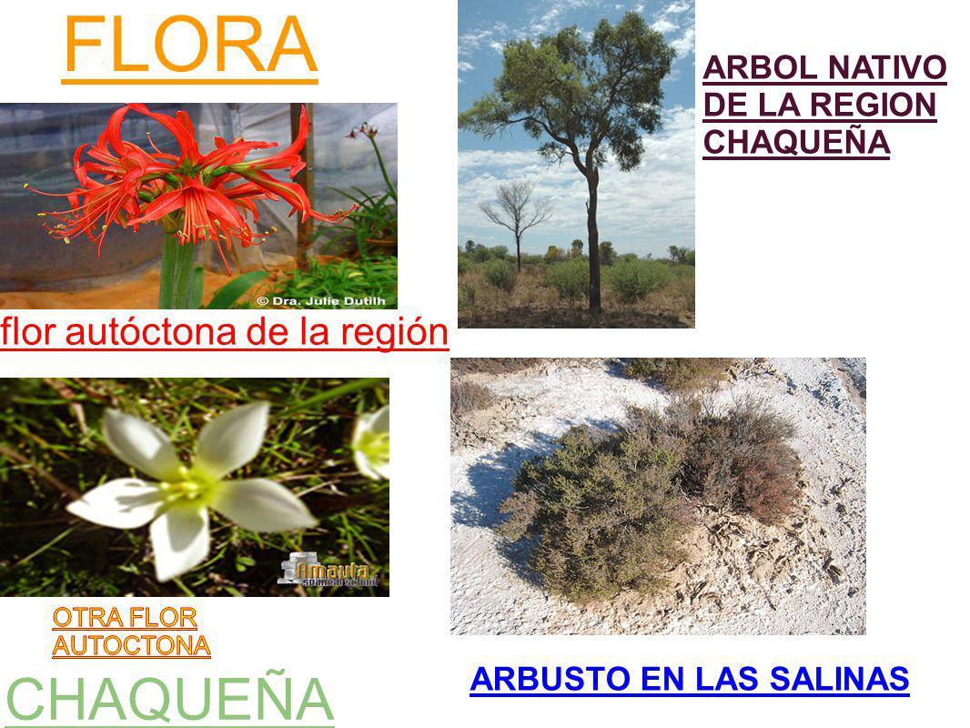 FLORA CHAQUEÑA flor autóctona de la región ARBUSTO EN LAS SALINAS ARBOL NATIVO DE LA REGION CHAQUEÑA