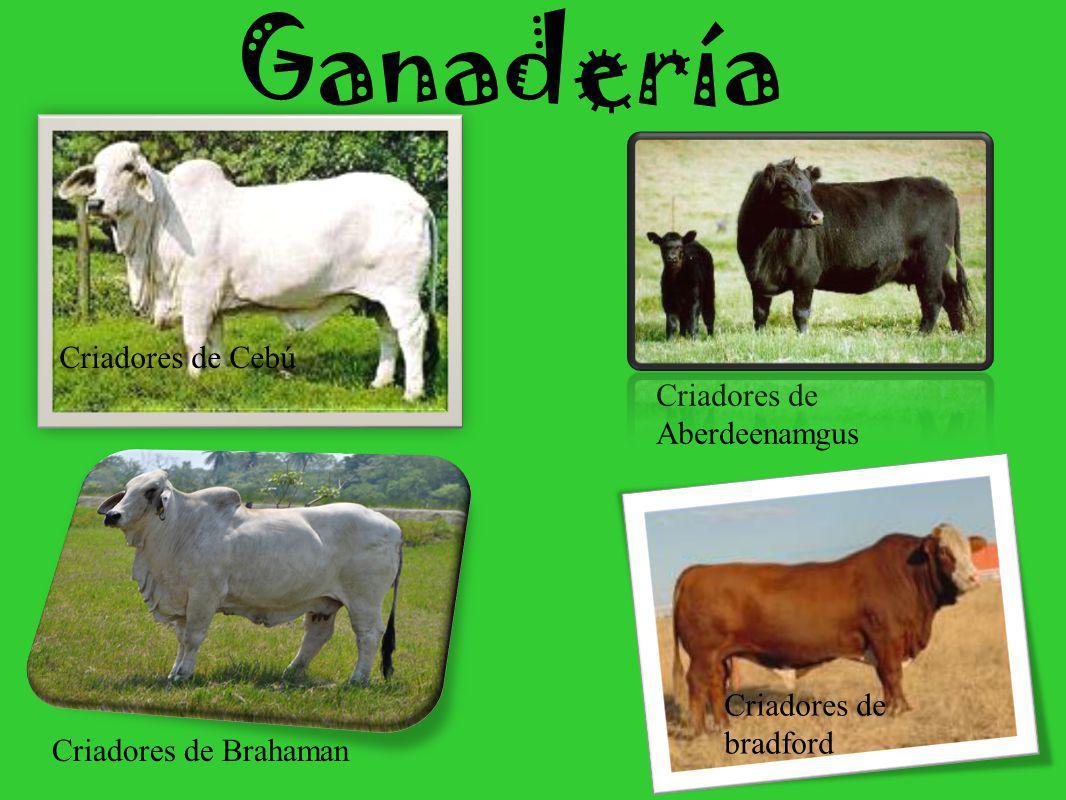 Agricultura La siguen en importancia la caña de azúcar, el maíz, al tabaco, el maní, el arroz, la mandioca, el girasol y el lino.