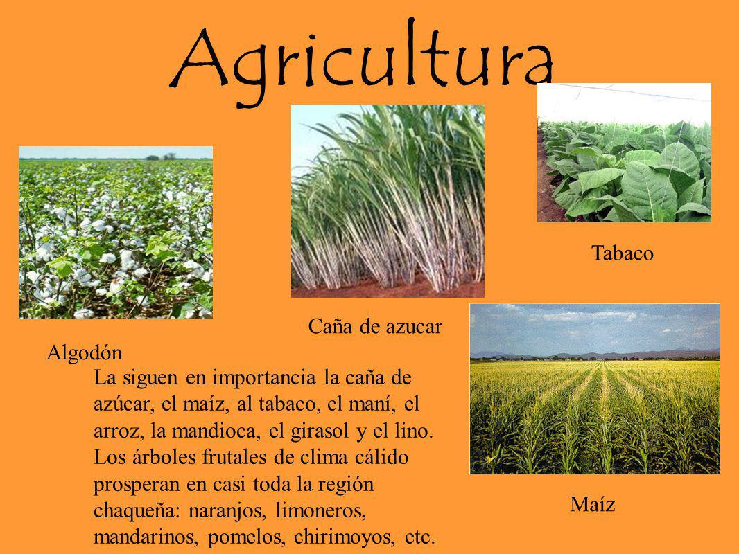 Agricultura La siguen en importancia la caña de azúcar, el maíz, al tabaco, el maní, el arroz, la mandioca, el girasol y el lino. Los árboles frutales