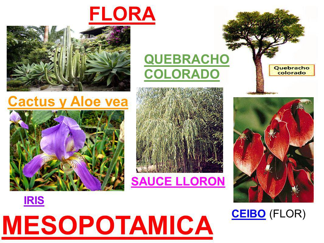 MESOPOTAMICA FLORA Cactus y Aloe vea QUEBRACHO COLORADO SAUCE LLORON IRIS CEIBO (FLOR)