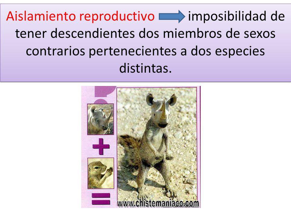 Aislamiento reproductivo imposibilidad de tener descendientes dos miembros de sexos contrarios pertenecientes a dos especies distintas.