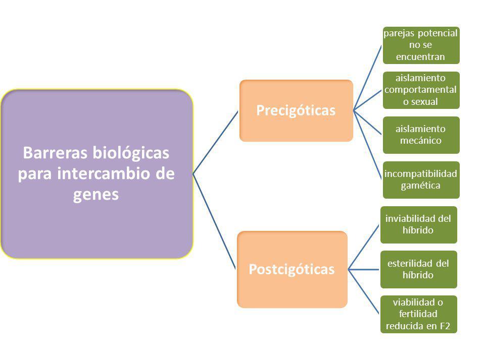Barreras biológicas para intercambio de genes Precigóticas parejas potencial no se encuentran aislamiento comportamental o sexual aislamiento mecánico